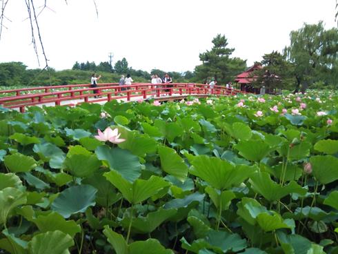 猿賀神社2011-4