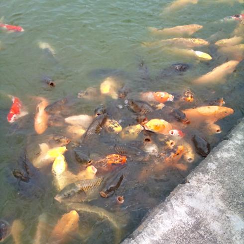猿賀神社2011-2