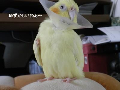 (/ω\) ハジカシー