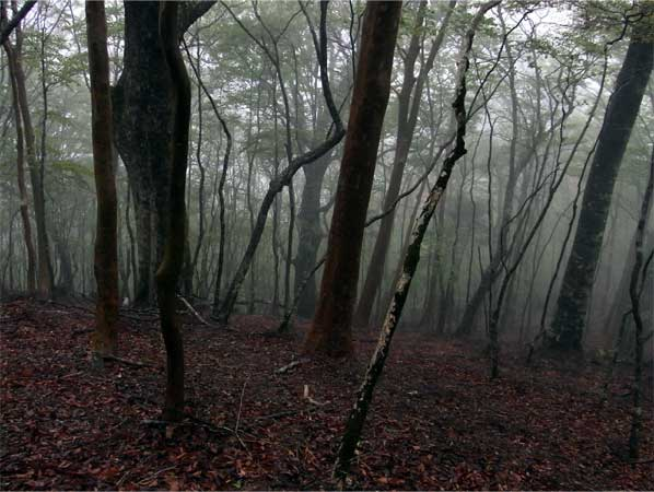 霧雨の自然林