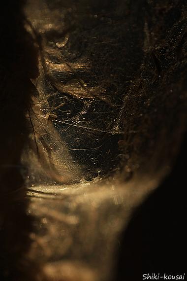 透明のガムテープ