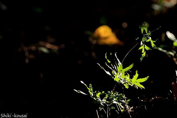印象的な光