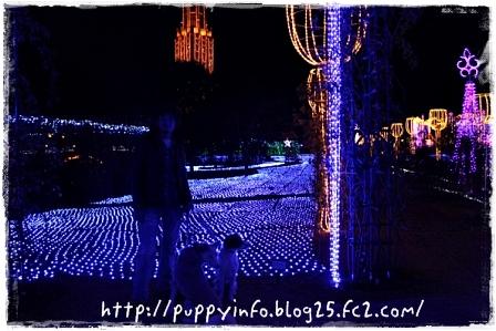 2010-12-02-3495-001.jpg