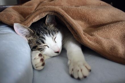 あ、キツネが眠っとる・・・