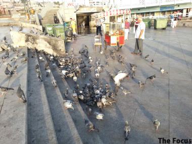 トルコ イスタンブール 鳩