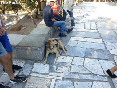 ギリシャ アテネ 犬