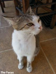 エギナ島 猫