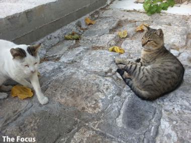 サモス島 ピタゴリオ 猫