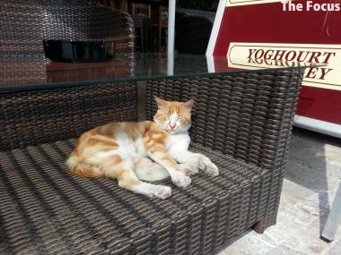 ギリシャ サモス島 ピタゴリオ 猫
