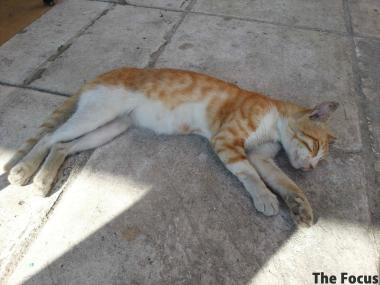 猫 サモス島 ギリシャ