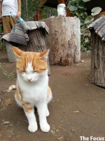 ウフララ渓谷 猫