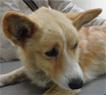 犬の肝に出来た転移性腫瘍1