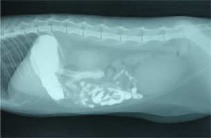 ネコの胃内異物(クツひも)5