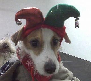 Santasplash.jpg