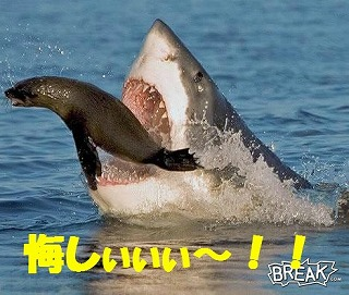 SharkVsSeal.jpg