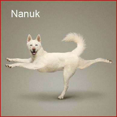 dog-yoga-calendar11.jpg