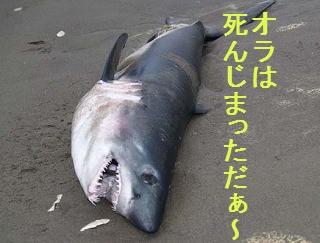 tiburonp.jpg