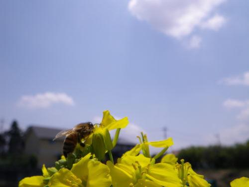 ミツバチ430ん02