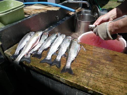釣果12匹