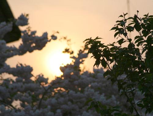 夕陽55の1