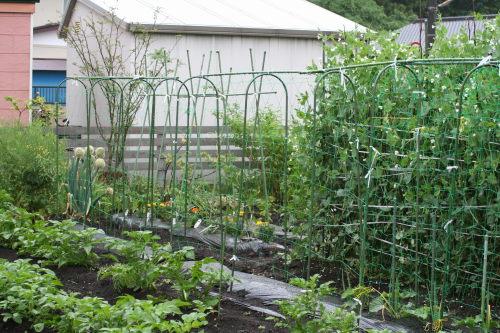 菜園520