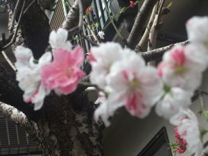 2013_0324春0043
