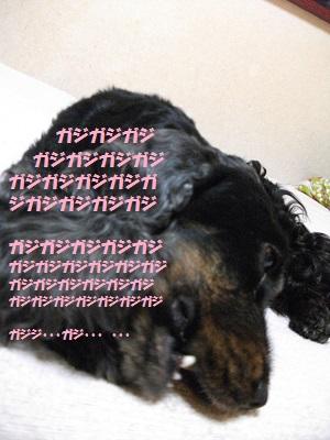 2013_0324春0036