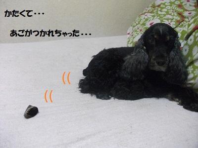 2013_0324春0047