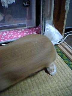 060_20100710074450.jpg