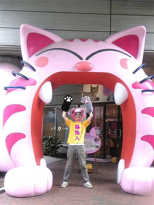 猫たま玄関