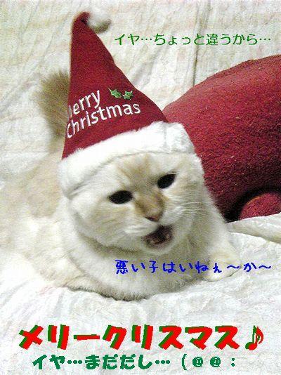 クリスマス もも なまはげ その2