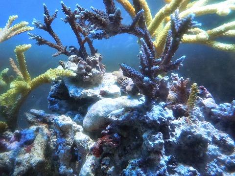 サンゴ?20120204
