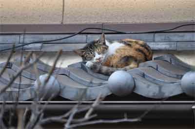 昼寝中のネコ