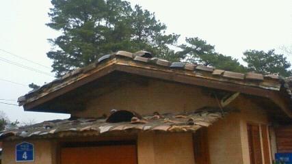 陶器を載せた屋根