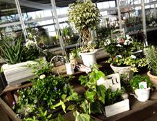 植物と組み合わせて