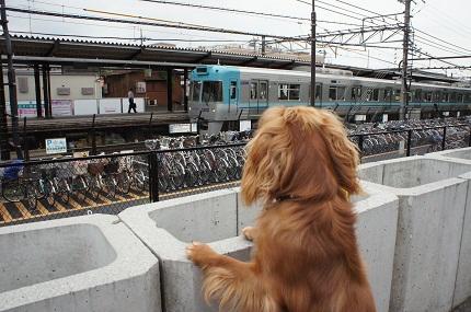 嵐丸 2011.6.16-32