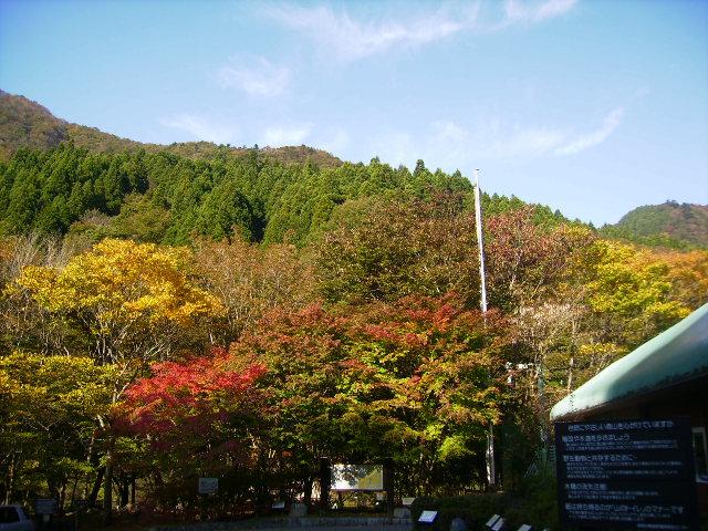 西丹沢自然教室112