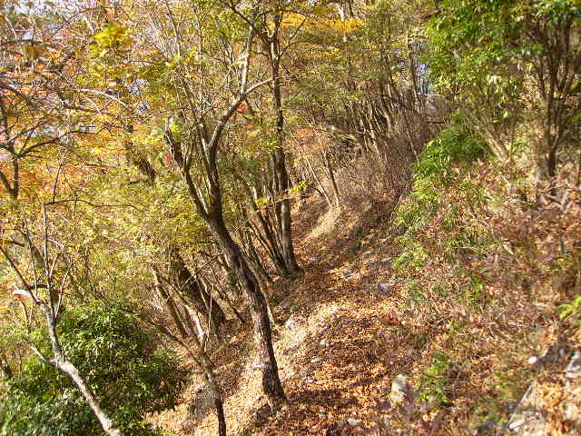 黄葉の山道247