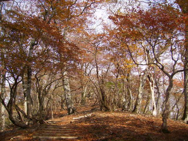 黄葉の尾根道230