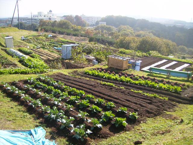 野菜畑72