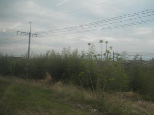 線路の間は草ぼうぼう