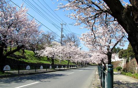 秩父長瀞の桜トンネル