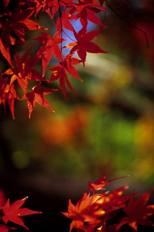 毛利氏庭園11(F100+VR70-300mmF4.5-5.6G+RVP100)