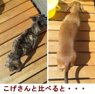 fureburu3.jpg