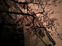 otonohaco_06.jpg