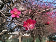 spring_02.jpg