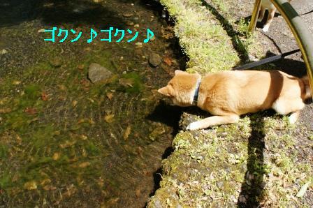 2010_0508(009).jpg