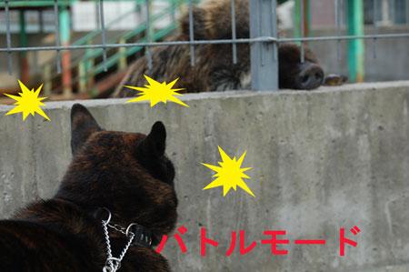 inoshishi1.jpg