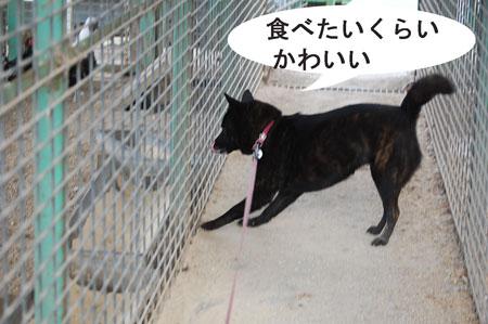 inoshishi2.jpg