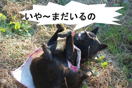 inoshishi8.jpg